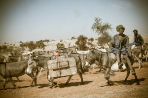 salt caravan heading south - northern mali, 2012